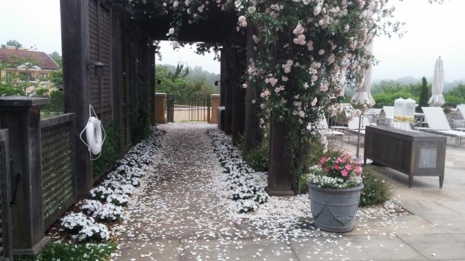 May 31 2016 pergola rose petals.jpg