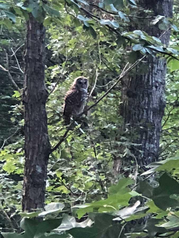 owl 7.29