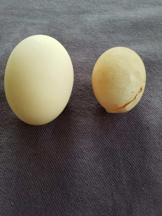 starter egg2