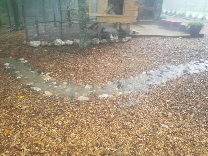 stream bed 3.jpg