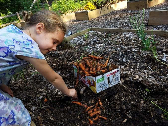 carrots pulling Rise.jpg