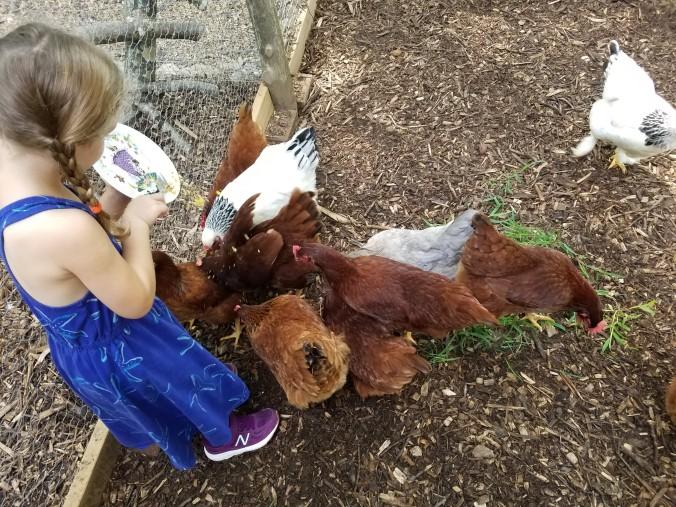 crumbs to hens 2