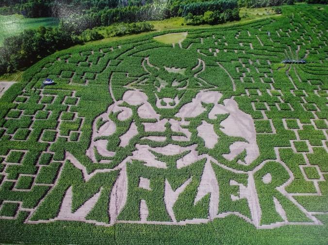 maze1 (2).jpg