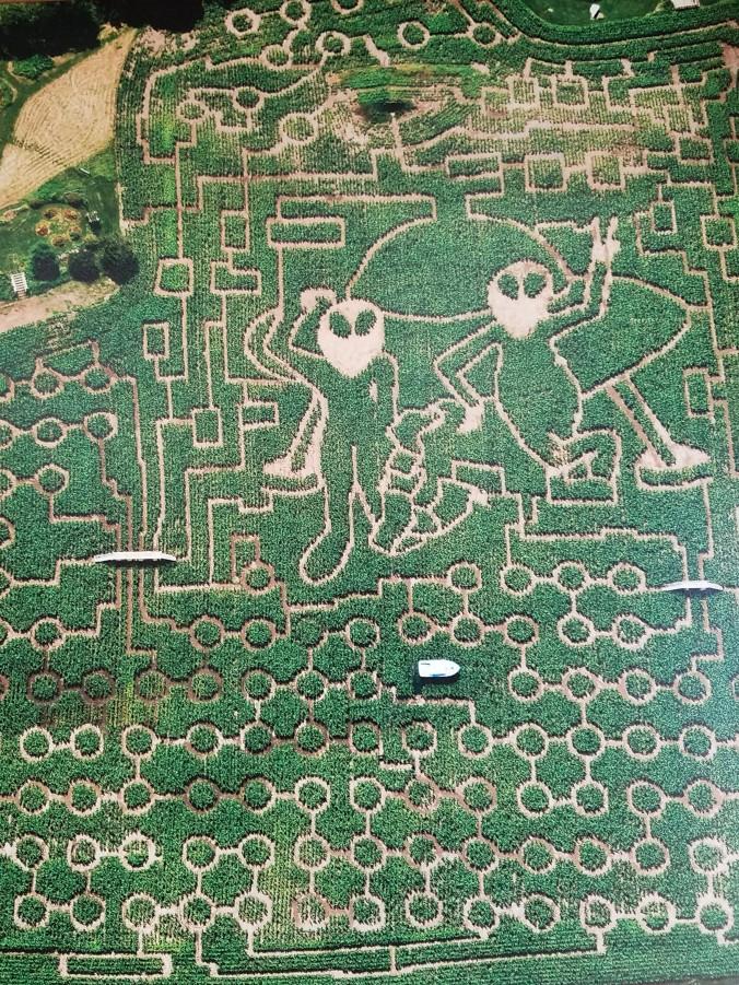 maze2 (2).jpg