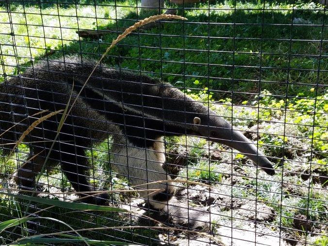 anteater2.jpg