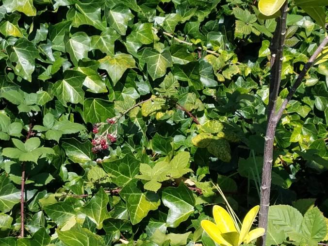 berries hiding