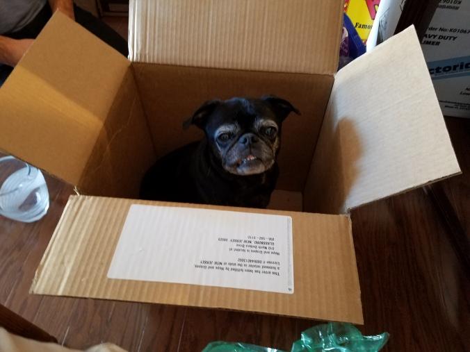 Coco in box.jpg