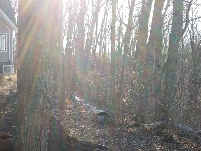 fallen tree1.jpg