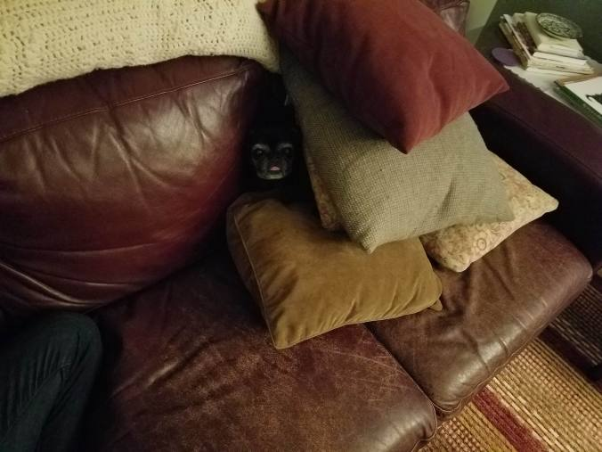Coco in pillows.jpg