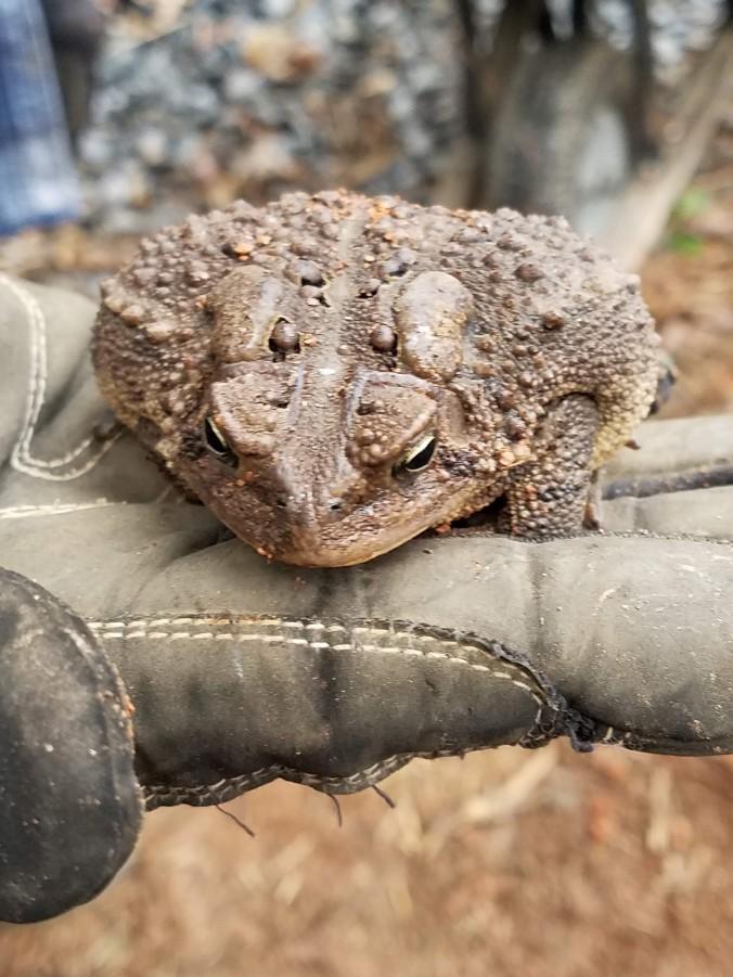 toad (2).jpg