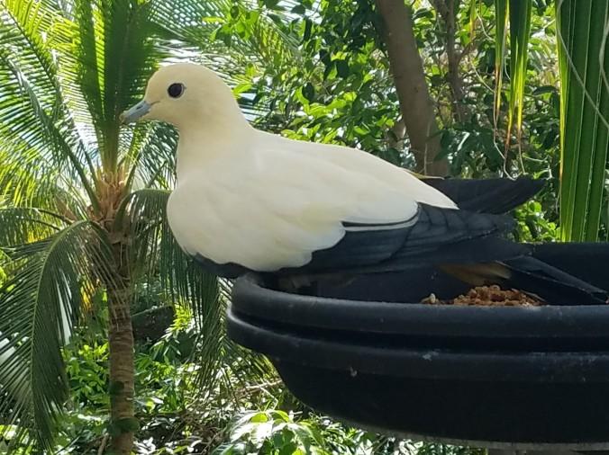 white bird (2).jpg