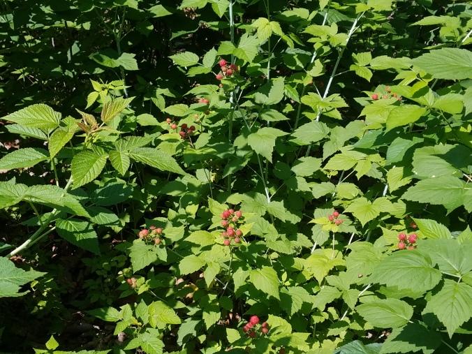 2018 berries.jpg