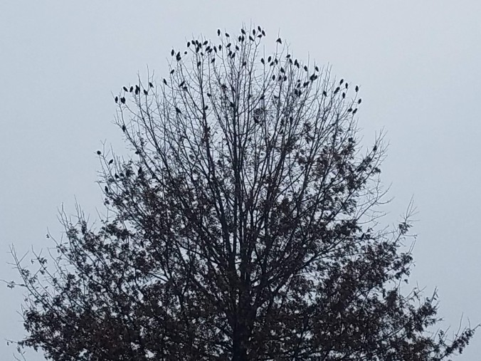 birds in a tree (2).jpg
