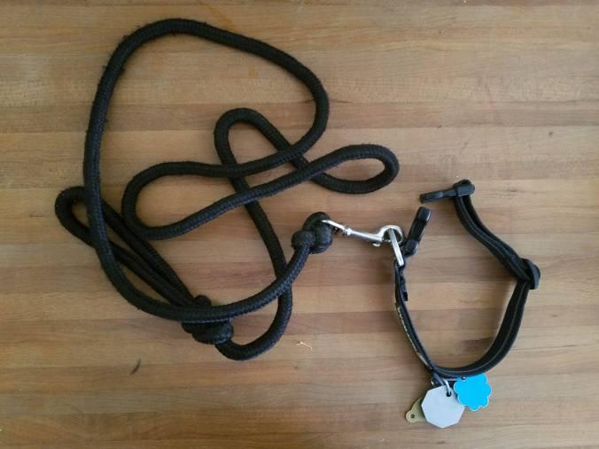 Coco's leash.jpg