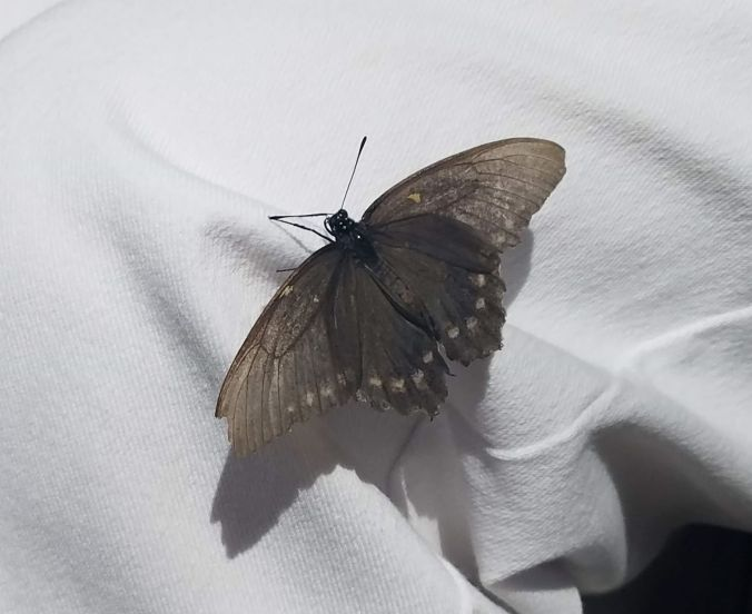 butterfly on mom4cr.2mp.jpg