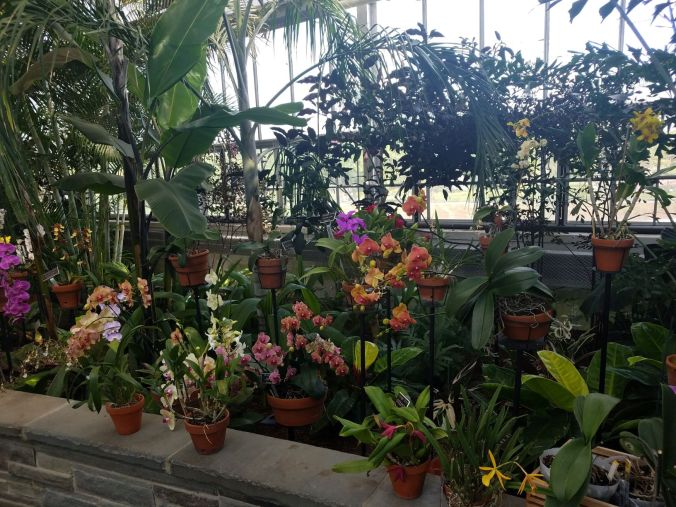 orchids group.2mp.jpg