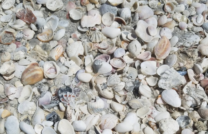 shells on beach cr.jpg