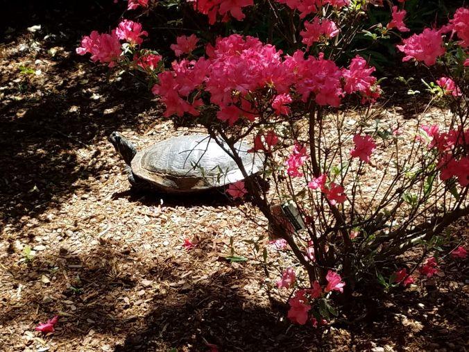 turtle.2mp.jpg