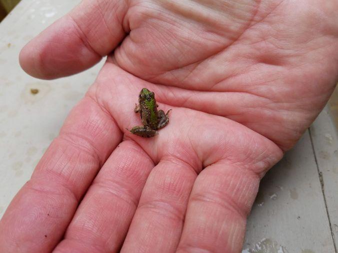froggie in hand.2mp.jpg