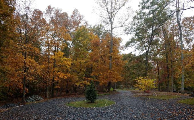 foliage (2)2mp.jpg