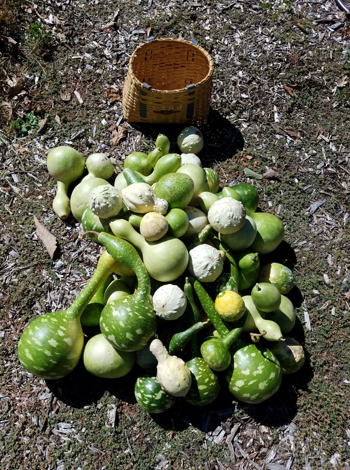 gourds2mp.jpg