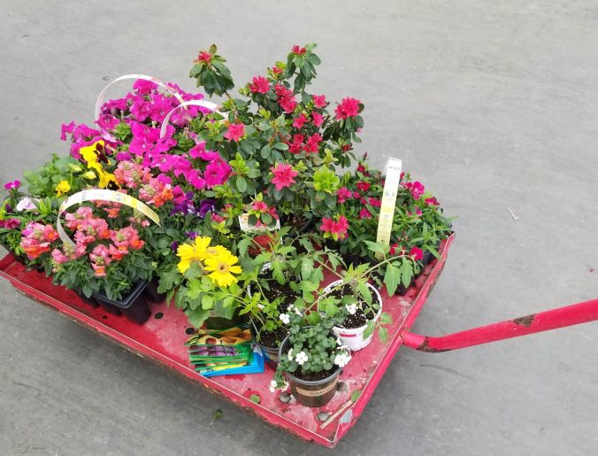 flowers in cart (2)2mp